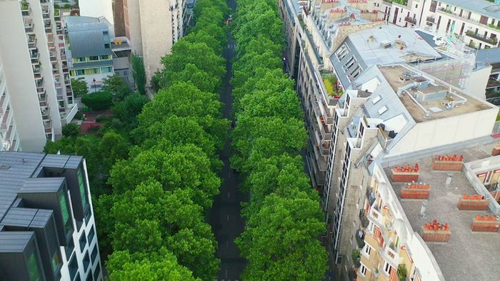 Bäume in Städten sind sehr wichtig für uns.