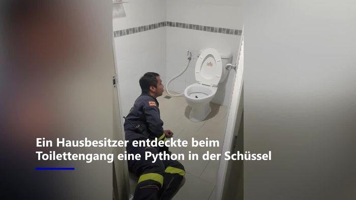 Am Po gestoßen: Tödliche Python in Toilette entdeckt