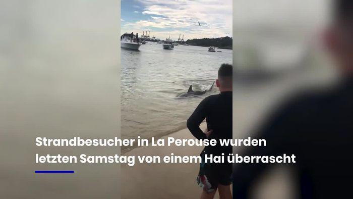 Schreck am Strand: Hai überrascht Badegäste