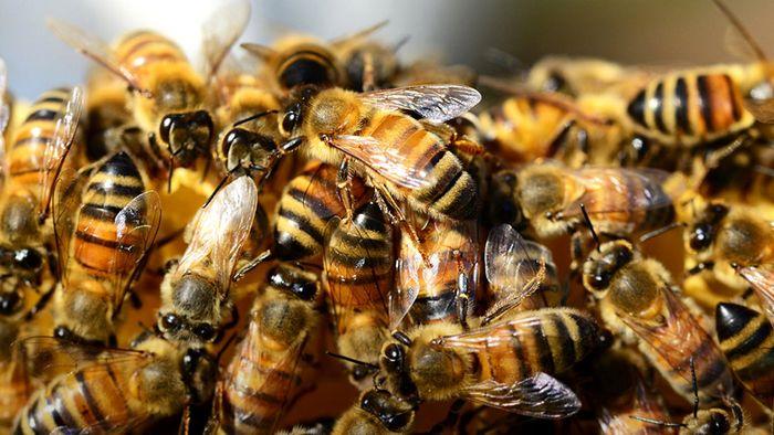 Beim Rasenmähen: Mann stirbt nach Bienen-Attacke
