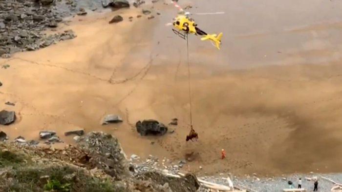 Über Klippe gestürzt: 800-Kilo-Stier braucht Luftrettung