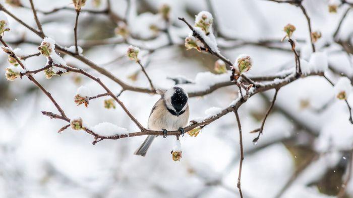 April-Bilanz: Frost-Rekorde! Darum war der April so kalt