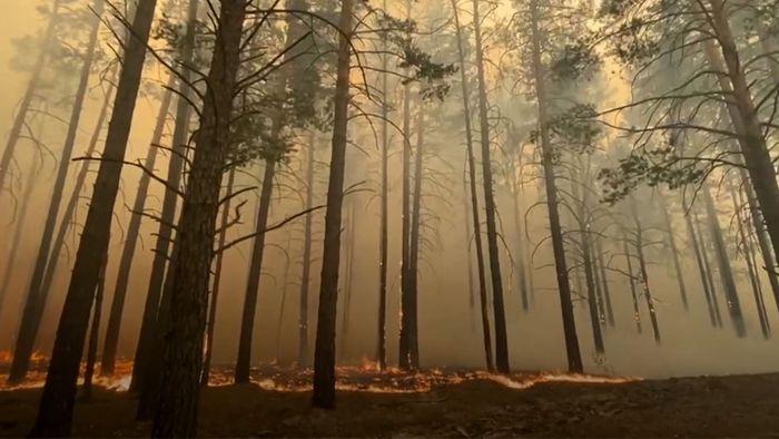 Bei Temperaturen über 30 Grad: Verheerende Brände wüten in Sibirien