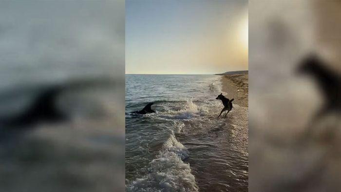 Ungewöhnliche Begegnung: Delfine spielen mit Hund