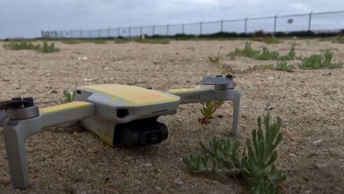 Tausende Brutplätze verlassen: Drohne richtet ökologisches Desaster an