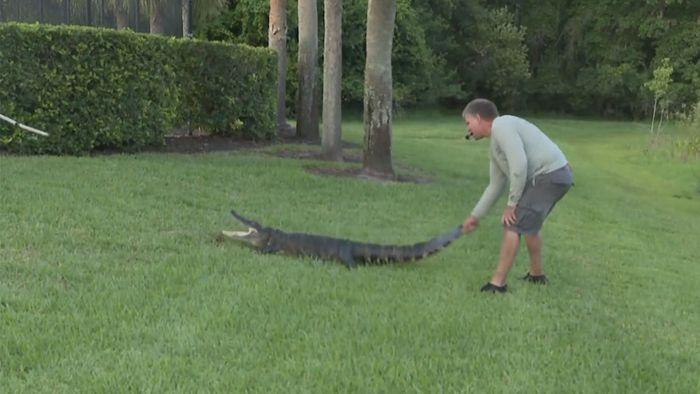 Frau rettet Hund vor Alligator – und wird selbst zur Beute