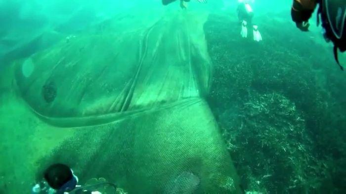 Riesenärger wegen Fischernetz: 40 Taucher retten Korallenriff vor Thailand