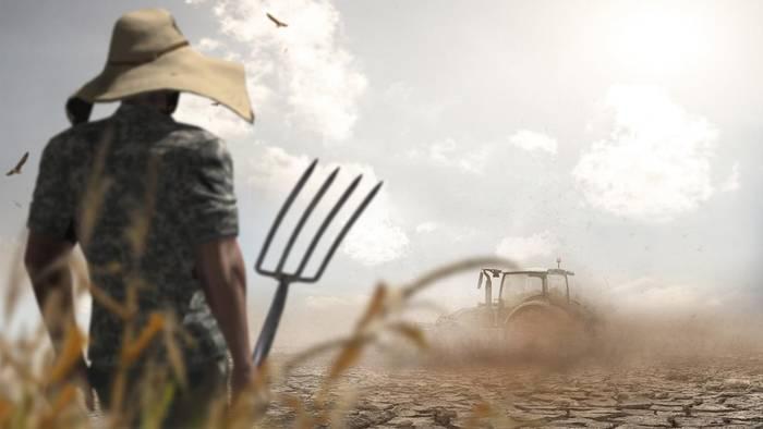 Im Juli versprechen einige Bauernregeln schon Aussagen über den kommenden Winter treffen zu können.
