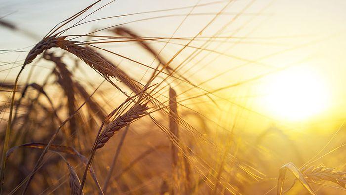 Augustprognose: Spätsommernachschlag - doch noch Hitze?
