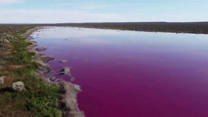 Bisher unbekanntes Phänomen: Seen färben sich pink