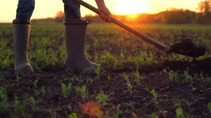 Auch im August gibt es viele Bauernregeln.