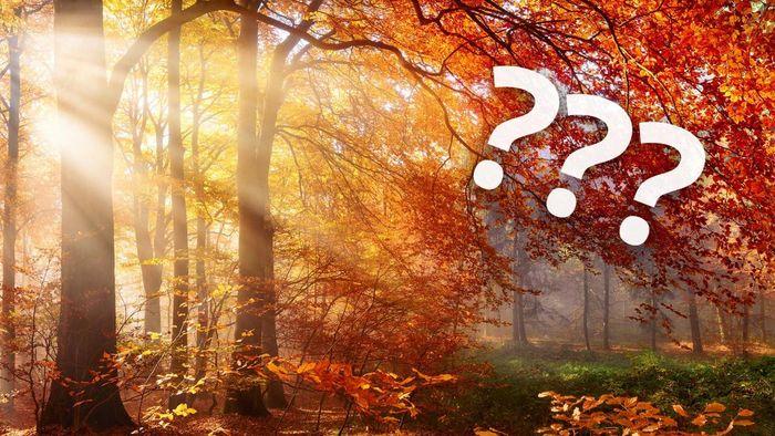 Viele hoffen nach diesem regnerischen Sommer auf einen goldenen Herbst.