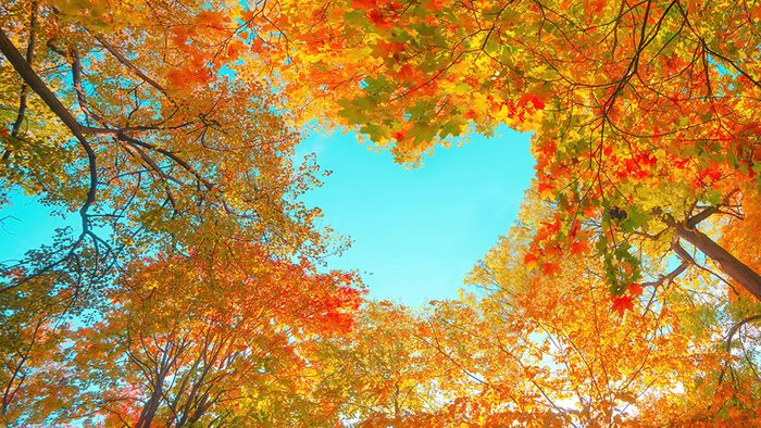 Erster Wetterblick in den Oktober: Golden oder doch zu nass?